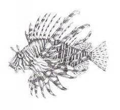 draw  lionfish google search pterois