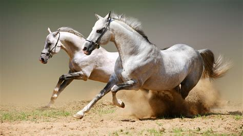 horse wild race wallpapers phone