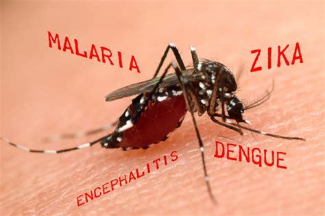 Welche Mücken Summen by Welche Krankheiten 252 Bertragen M 252 Cken M 252 Ckenproblem