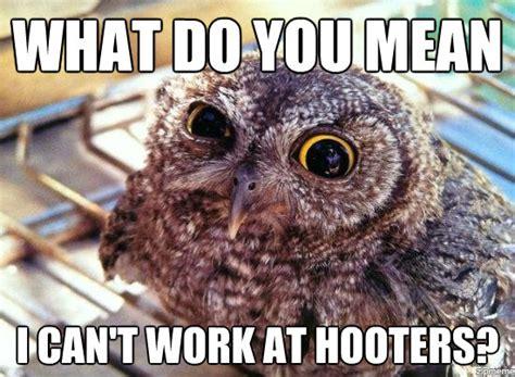 Meme Owl - hilariously adorable owl memes 11