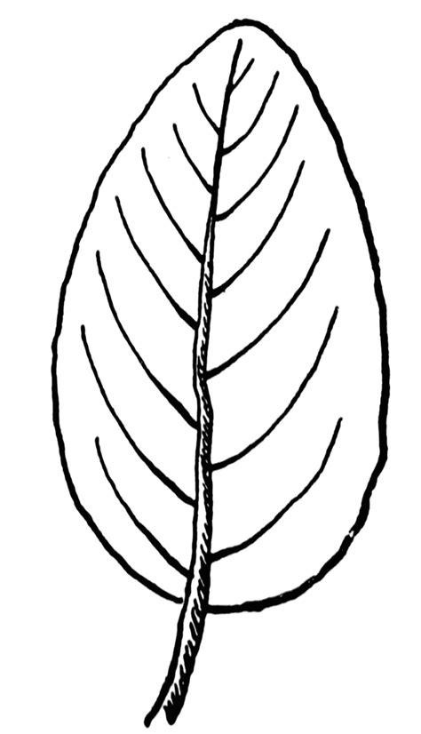 leaf clipart black  white  cliparts