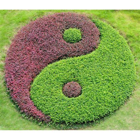 Yinyang Jardin Japonais Zen Yin Et Yang  Yin&yang Yin