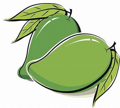 Mango Clip Illustrations Similar