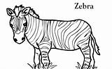 Coloring Zebra Pages Printable sketch template