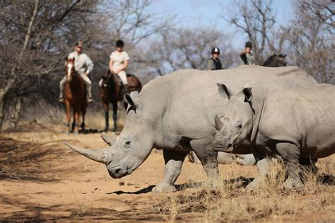 safari horse africa south luxury lodges chomping bit rhino go collection perspective putting things safaris
