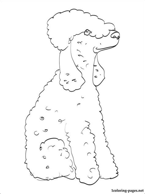 bedlington terrier coloring page coloring pages