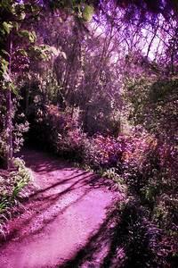 Enchanted forest 6 by CathleenTarawhiti on DeviantArt