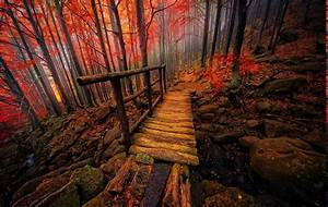 Nature, Landscape, Forest, Colorful, Bridge, Fall, Mist, Italy, Creeks, Trees, Atmosphere