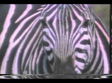 animal alphabet   trailer youtube