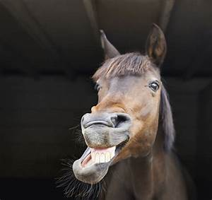Horse Facts  15 Things You Probably Didn U0026 39 T Know About