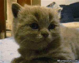 A very tired kitten | HilariousGifs.com