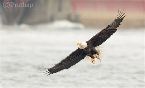 incredible bird photography tips  beginners