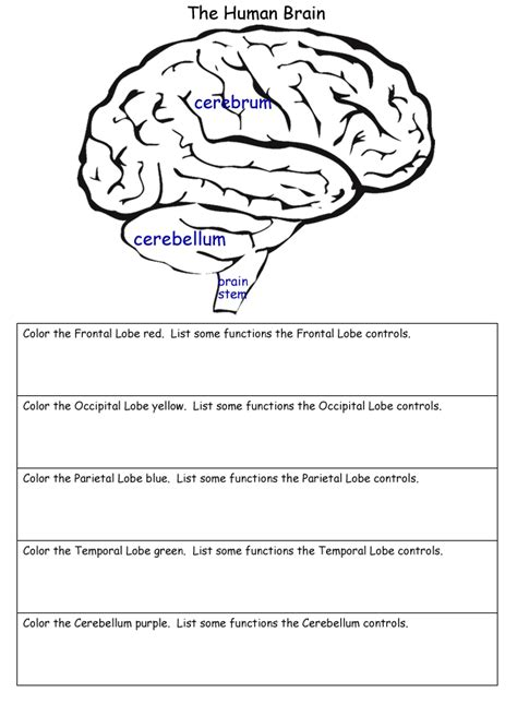 science worksheets s worksheets and brain