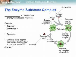 2.4 Chemical Reactions and Enzymes THINK ABOUT IT - ppt ...
