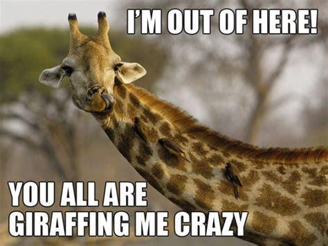 Giraffe Spider Meme - amusing animal puns selection 10 pics izismile com