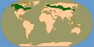 ecoregion taiga