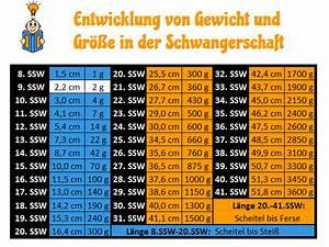 Fötus Größe Berechnen : 9 ssw entwicklung fehlgeburtsrisiko symptome anzeichen ~ Themetempest.com Abrechnung
