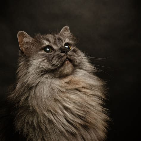 12096 professional photographs of animals cat photography www imgkid the image kid has it