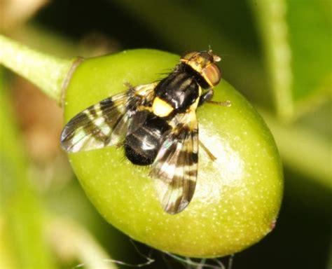 http://www.biolib.cz/en/image/id107631/