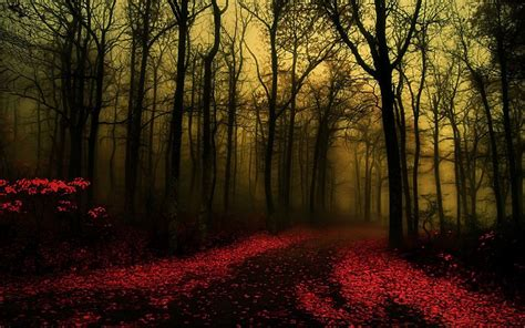 Fall Backgrounds Spooky by 20 Forest Backgrounds Wallpapers Free Creatives