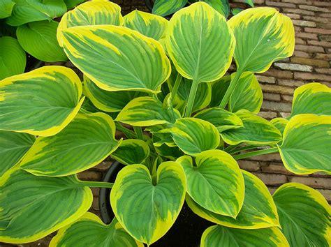 Indoor Tropical Flowering Plants