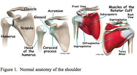 Shoulder Rotator Cuff Tear - UCLA Orthopaedic Surgery, Los ...
