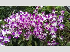 Singapore Orchid Garden Ahkeno's Blog