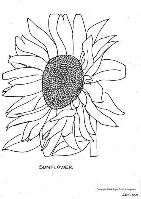 sunflower coloring pages    print