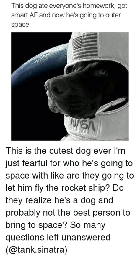 25+ Best Memes About Cutest Dogs Ever  Cutest Dogs Ever Memes