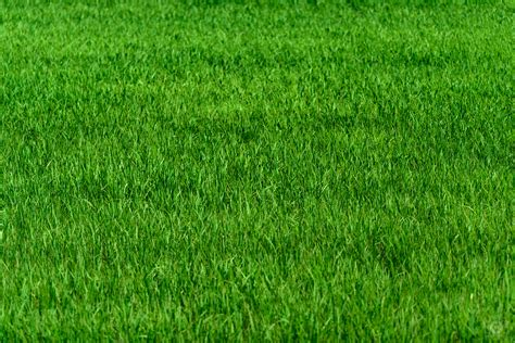 of grass grass meadow texture high quality free photos