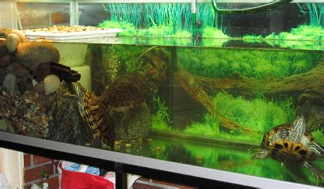 land and water aquarium land and water turtle ta sequa