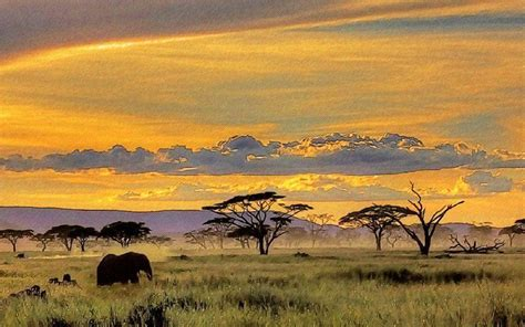Safari Animals Wallpaper - safari wallpapers wallpaper cave