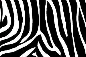 draw zebra print drawingnow