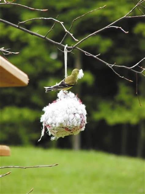 cotton nesting ball  birdhouse chick