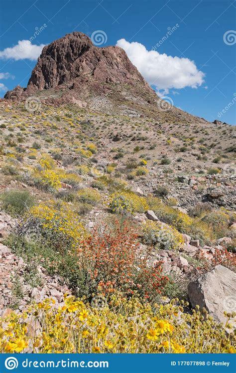 boundary cone  western arizona spring wildflowers stock photo image  evening attraction