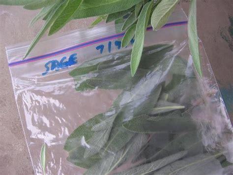 how to freeze cilantro freezing herbs basil rosemary thyme oregano cilantro parsl recipe food com