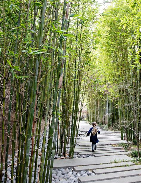 bamboo landscape 25 best ideas about bamboo garden on pinterest bamboo privacy fence garden privacy screen