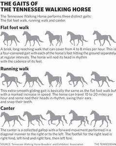 10 Best Images Of Horse Gait Chart