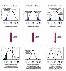 Biology Graphs  Natural Selection