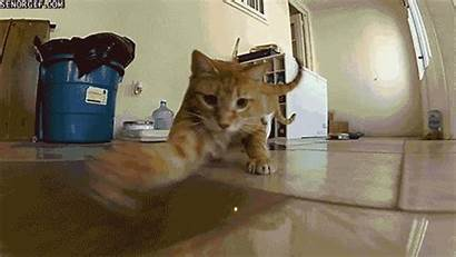 Cat Never Funny Gifs Cats Dog Ending