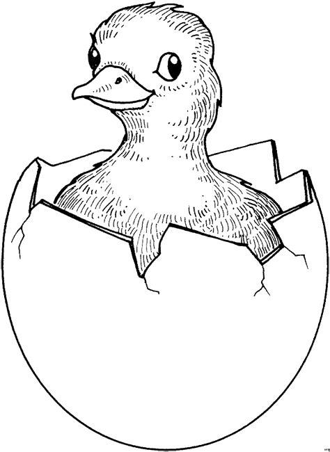 geschluepftes kueken  ausmalbild malvorlage tiere