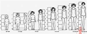 Children s proportions for artists