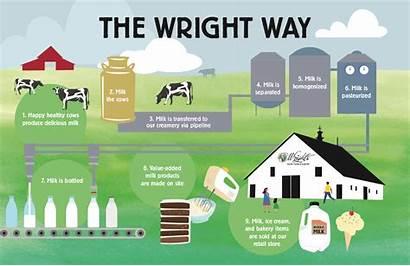 Process Processing Dairy Farm Plant Moo