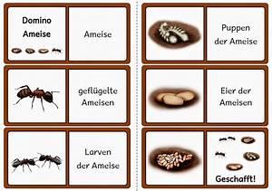 Weiße Fliege Bekämpfen Hausmittel : die besten 20 ameisen ideen auf pinterest ameise handwerk hausmittel gegen ameisen und ~ Whattoseeinmadrid.com Haus und Dekorationen