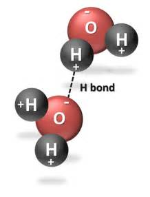 Water Molecule Hydrogen Bond