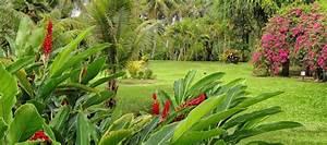 Les Plus Beaux Arbres Pour Le Jardin : un beau jardin de plantes et de fleurs tropicales en ~ Premium-room.com Idées de Décoration