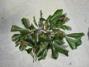 Oak Tree Leaf Types