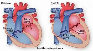 Human Heart Diagram  Anatomy  Picture  Valves  U0026 Arteries