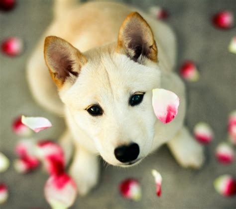 Beautiful Animals Wallpapers Free - beautiful dogs photos and wallpapers free