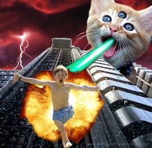 1000+ images about Laser Cat on Pinterest | Cats, Desktop ...